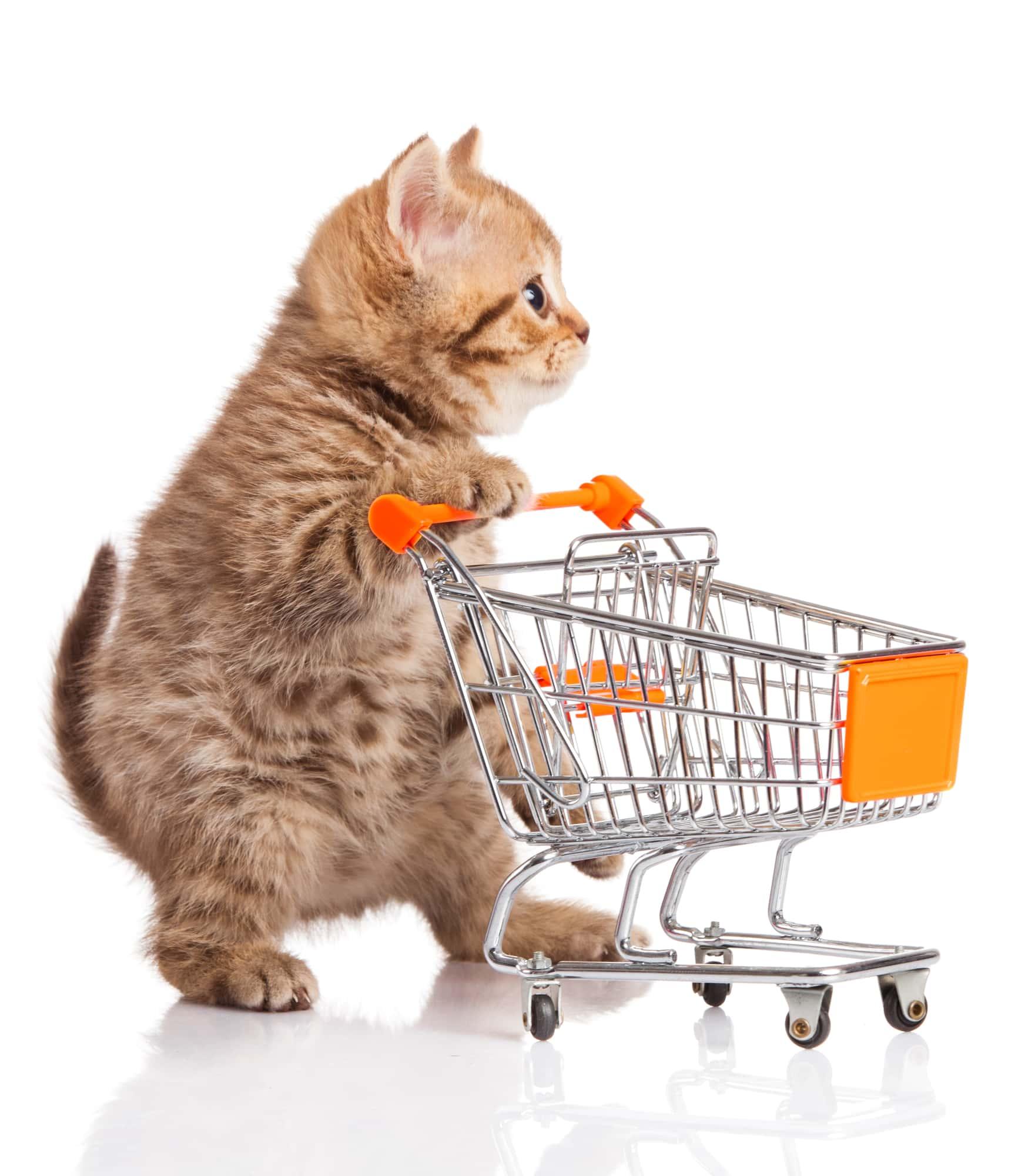 איך בוחרים חנות חיות מומלצת